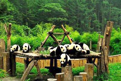 巴蜀游学营丨品三国,游巴蜀;探秘藏羌文化,发掘古蜀文明